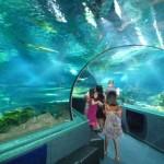 【グアム 11】100mの水中トンネル:アンダーウォーターワールド水族館