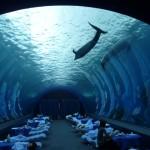 【八景島で夢体験3】水族館で目覚めた朝