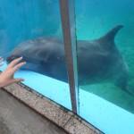 【八景島で夢体験4】ドチザメ にタッチ!
