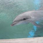 【八景島で夢体験5】イルカにタッチ!