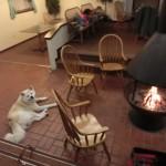 Tama Hillsで週末 4:最終回 多摩ヒルズの夜とホテルの朝食