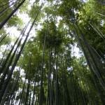 【ぶらり鎌倉1】竹庭の報国寺
