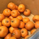 ハロウィンの、オレンジ色のパンプキン