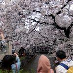 【京都小紀行 ひとり旅1】桜の京都、ひとり旅
