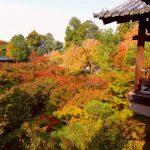 【京都小紀行 薄紅葉7】紅葉の名所、東福寺