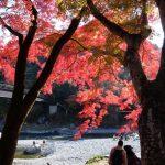 晩秋の、御岳渓谷の紅葉