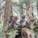 【お月見ひとり旅3】お猿さん、元気でした!